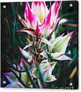 Highlighted Flower Acrylic Print