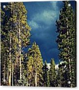 Hike In The Woods Acrylic Print