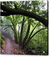 Hiking Huckleberry Acrylic Print