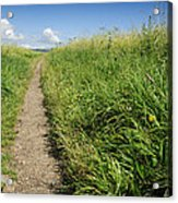 Hiking Path In Devon England Acrylic Print