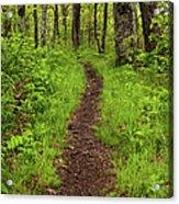 Hiking Through The Blue Ridge I Acrylic Print