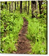 Hiking Through The Blue Ridge II Acrylic Print