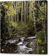 Hiking View Acrylic Print