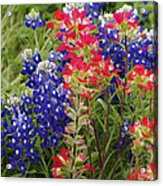 Hill Country Bloom Acrylic Print