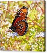 Hill Country Butterfly Acrylic Print