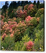 Hill Side Colors Acrylic Print
