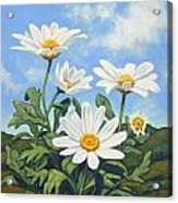 Hills And White Daisies Acrylic Print by James Derieg