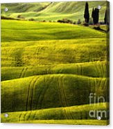 Hills Of Toscany Acrylic Print