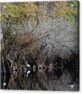 Hillsborough Egret 01 Acrylic Print