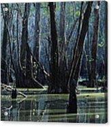 Hillsborough Swamp Autumn 32 Acrylic Print