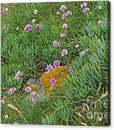 Hillside Of Wildflowers Acrylic Print