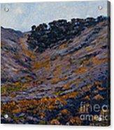 Hillside Sage Acrylic Print