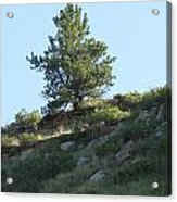 Hillside Scenery With White Tail Buck. Acrylic Print