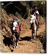 Himalayan Horseman - Nepal Acrylic Print