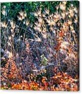 Hint Of Fall Colors 15813 Acrylic Print