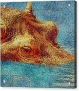 Hippo - Happened At The Zoo Acrylic Print