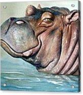Hippo Lisa Acrylic Print