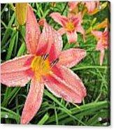Hiroko Pink Daylily Acrylic Print