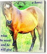 Care About A Horse And He Will Give You His Heart In Return  Acrylic Print