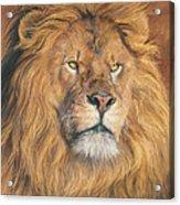 His Majesty - Detail Acrylic Print