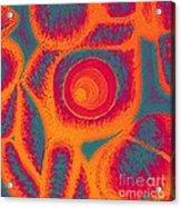 His Navel Flames Acrylic Print