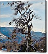 Hitchhiker On Highway 173 Acrylic Print