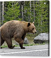 Hmmm .... What's On The Other Side Of The Road Today? Acrylic Print