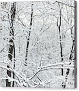Hoar Frost Covered Trees In Forest Acrylic Print