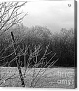Hoar Frost On The Wood Acrylic Print