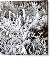 Hoarfrost 18  Acrylic Print