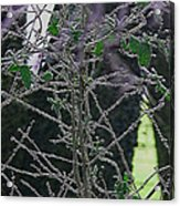 Hoars Frost-featured In Nature Photography Group Acrylic Print