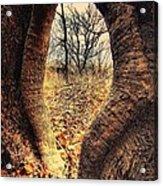 Hobbitt Vip Entrance Acrylic Print