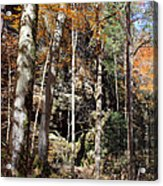 Hocking Hills Trees Acrylic Print