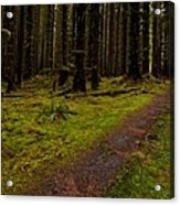Hoh Rainforest Road Acrylic Print