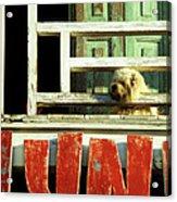 Hoi An Dog 02 Acrylic Print