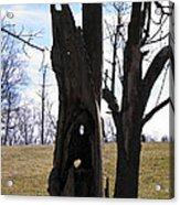 Holey Tree Trunk Acrylic Print