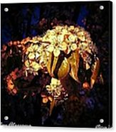 Holiday Blossoms Acrylic Print