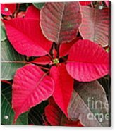 Holiday  Color Acrylic Print