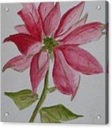 Holiday Flower Acrylic Print