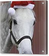 holiday horse Friendly Acrylic Print