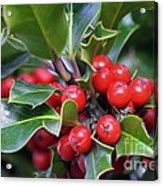 Holly Berries 2 Acrylic Print
