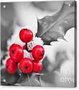 Holly Acrylic Print