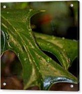 Holly Leaf Abstract Acrylic Print