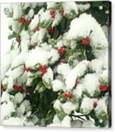 Holly Tree With Snow Acrylic Print