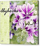 Hollyhocks Acrylic Print