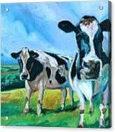 Holstein Amoogos Acrylic Print