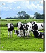 Holstein Heaven Acrylic Print