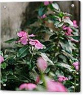 Home Flower Acrylic Print