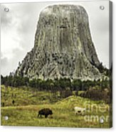 Home On The Range At Devils Tower Acrylic Print