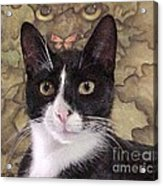 Homeless Kitty To Super Model Acrylic Print by Robert Stagemyer